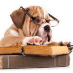 dog-reading-300x221-150x150